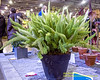 The Philadelphia Horticultural Society Presents The 2018 Philadelphia Flower Show 'Wonders OF Water'