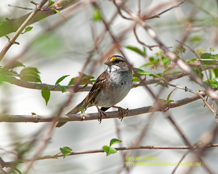 Bird In The Backyard