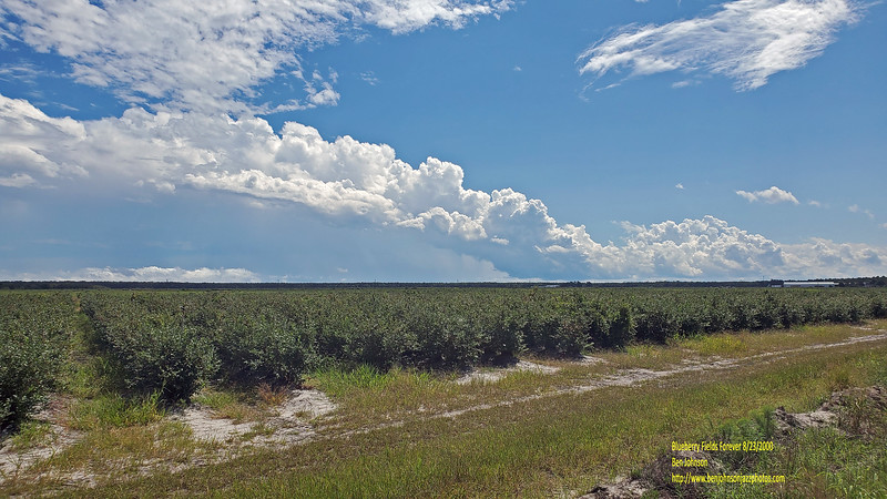 Blueberry Fields And Summer Clouds