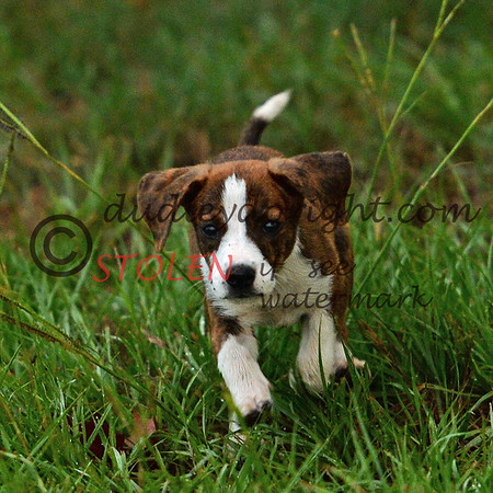 Home2014-003 pup