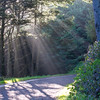 Trail at Heceta Head