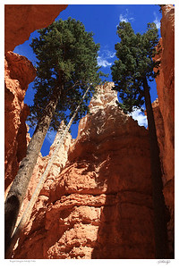 Bryce Canyon - Navajo Trail