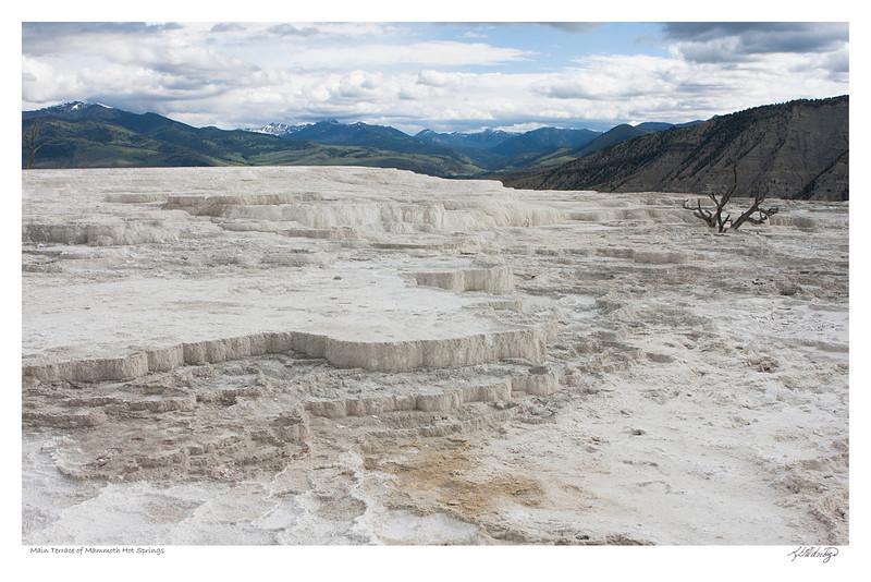 Mammoth Hot Springs Main Terrace Yellowstone Park Wyoming