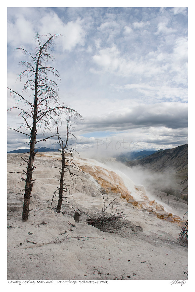 Canary Springs Mammoth Hot Springs, Yellowstone Wyoming