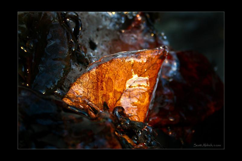 Leaf encased in ice just South of Anchorage, Alaska.