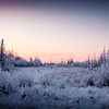 Meadow near Palmer, Alaska.  Hoar frost on everything as the temperature was in the -30 (F) range.
