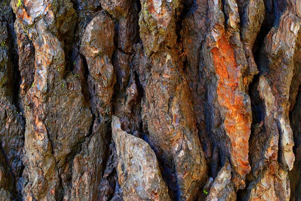 Glacier Point, Yosemite, Tree Bark (© James D. DeCamp   http://www.JamesDeCamp.com   614-367-6366)