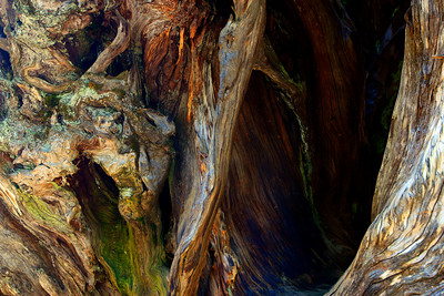 Mariposa Grove, Yosemite, Tree root Fine Art Print (© James D. DeCamp | http://www.JamesDeCamp.com | 614-367-6366)
