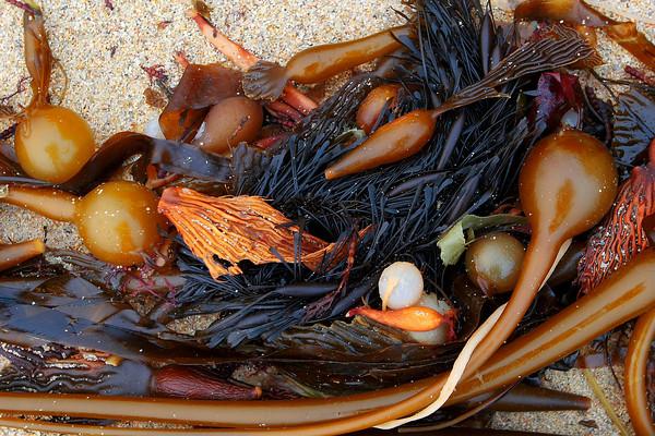 Seaweed along the Northern Big Sur Coastline (© James D. DeCamp   http://www.JamesDeCamp.com   614-367-6366)