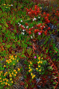 Flowers along the Big Sur Coast (© James D. DeCamp | http://www.JamesDeCamp.com | 614-367-6366)