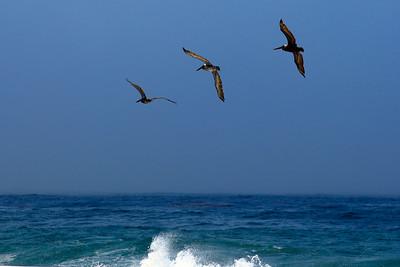 Birds along the Monterey Coast (© James D. DeCamp | http://www.JamesDeCamp.com | 614-367-6366)