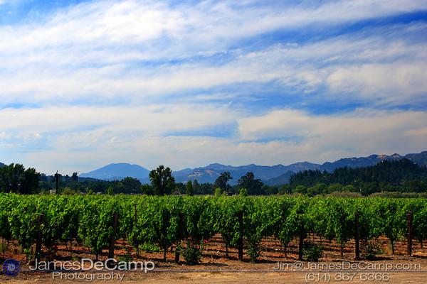 Napa Valley, California (© James D. DeCamp | http://www.JamesDeCamp.com | 614-367-6366)