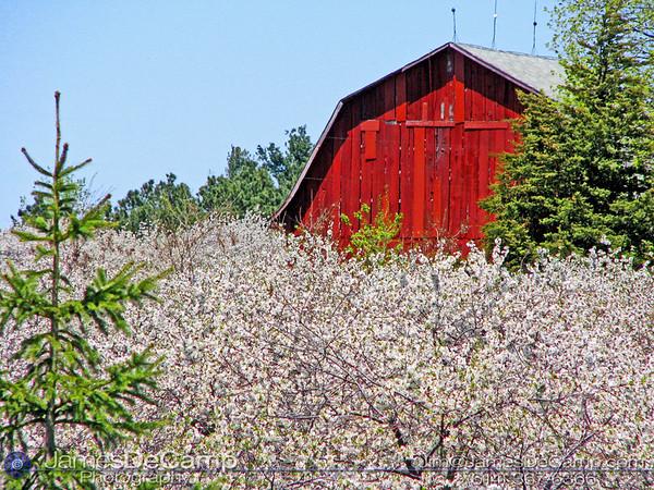 20090517WilliamsburgBarn&Blossoms