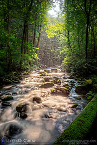 Scenes in and around the Great Smoky Mountains National Park's Roaring Fork Motor Nature Trail Tennessee photographed Tuesday, July 26, 2011. (© James D. DeCamp | http://www.JamesDeCamp.com | 614-367-6366)