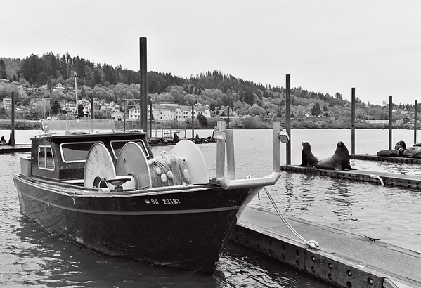 Fishing boat, Harbor with seals.