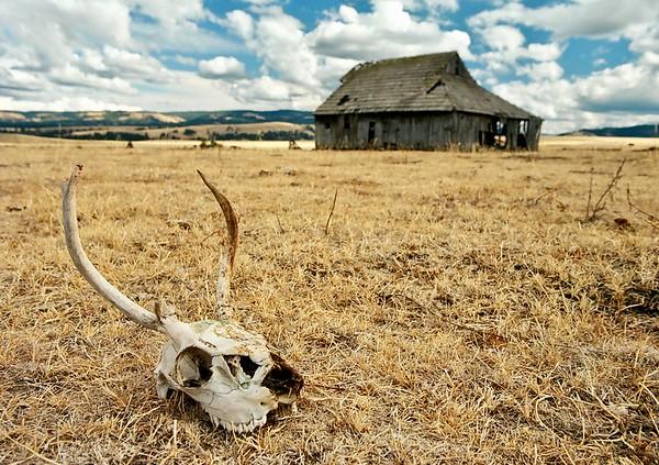 A lone skull stirs the wonderings of the mind.  How did this deer die,; old age? coyote,?