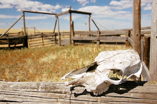 Cattle Station on the Prairie