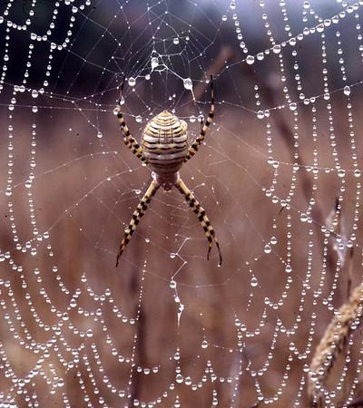 Dewey Web.