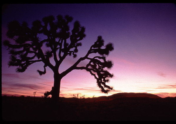 Sunset at Joshua Tree National Park.