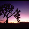 Sunset at Joshua Tree National Park.