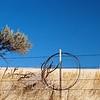 Windblown bush and Fence
