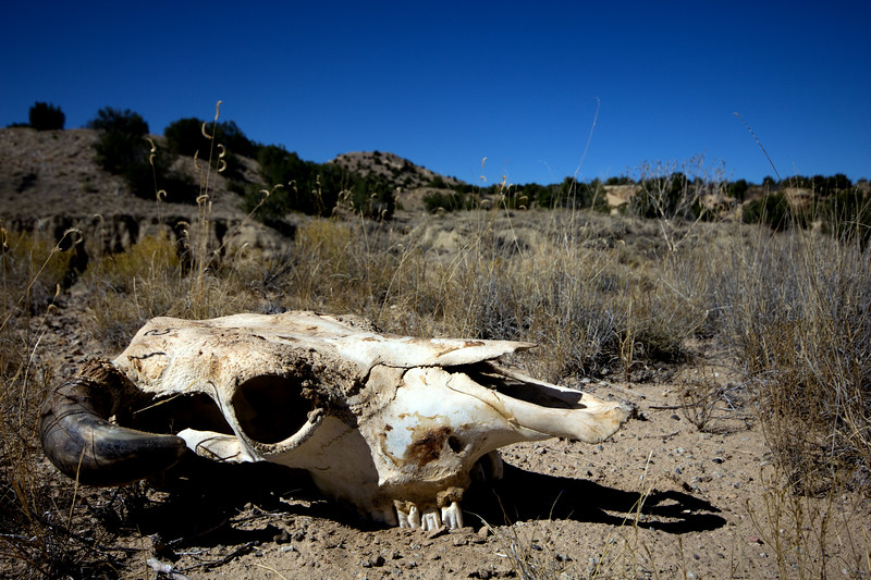 Desert Myths