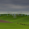 The rolling green hills of Washington state's Palouse area brightens an overcast gloomy day.