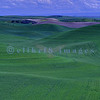 Looking across the rolling hills of Washington's Palouse toward clumps of clouds.