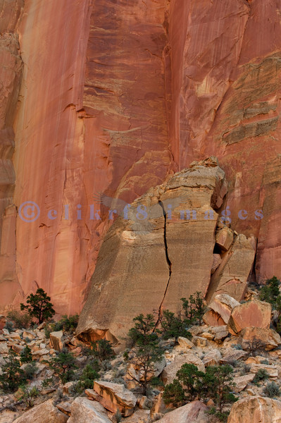 Golden pink sandstone walls lie along the Capitol Gorge scenic drive in Utah's Capitol Reef National Park. Large slabs like this one are testament to the continuing erosion of the Colorado Plateau.