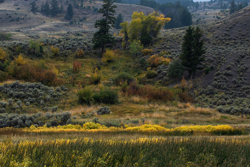 yellowstoneNPWY_2013_9901