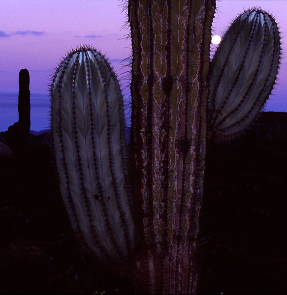 Cordon And Moon at Twilight, Catavina Boulderfields<br /> (Baja Mexico, 2005)