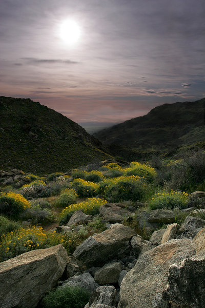 Haze And Wildflowers, Anza-Borrego SP<br /> (California, 2005)