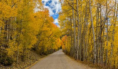 Boreas Pass Under Foliage Archway