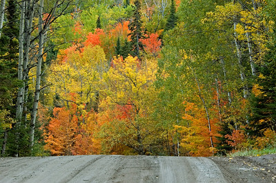 Fall Colors - Hovland, MN