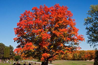 Fall Colors - Coleraine, MN