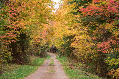 Fall Colors-County Road 38 - Itasca County, MN
