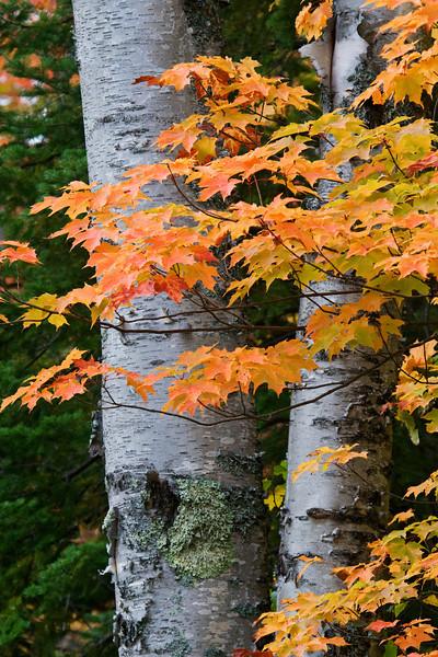 Fall Colors - Lax Lake Road - Lake County, MN