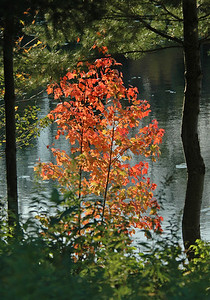 Fall Colors - Dunning Lake - Itasca County, MN