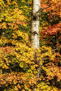 Fall Colors-Arrowhead Trail-Cook county MN
