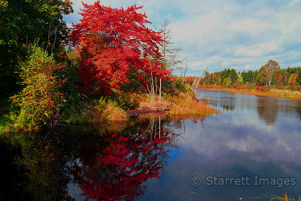 Pond in Maine