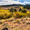 Fall color near the Monitor Pass