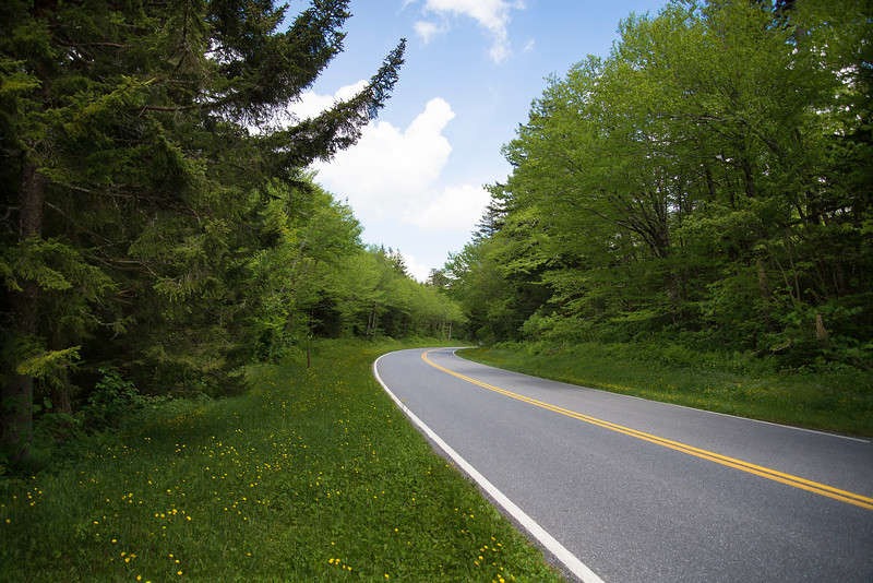 Scenic roadway in the Smokies