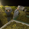 """A late-night harvest of Chardonnay. <br>Photo by <a href=""""http://www.tinacciphoto.com"""" target=""""_blank"""">Jason Tinacci</a> / Napa Valley Vintners"""