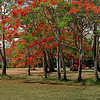 Airport flametrees 24x6