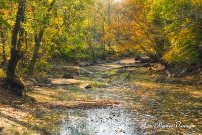 Reedy Creek Trail
