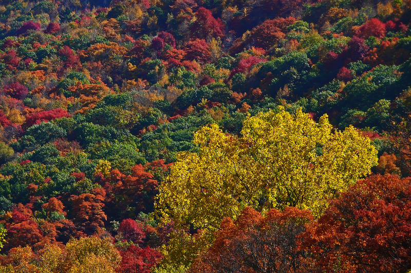 Lehigh Gap - Carbon County, PA - 2008