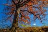 Schuylkill County, PA - 2014