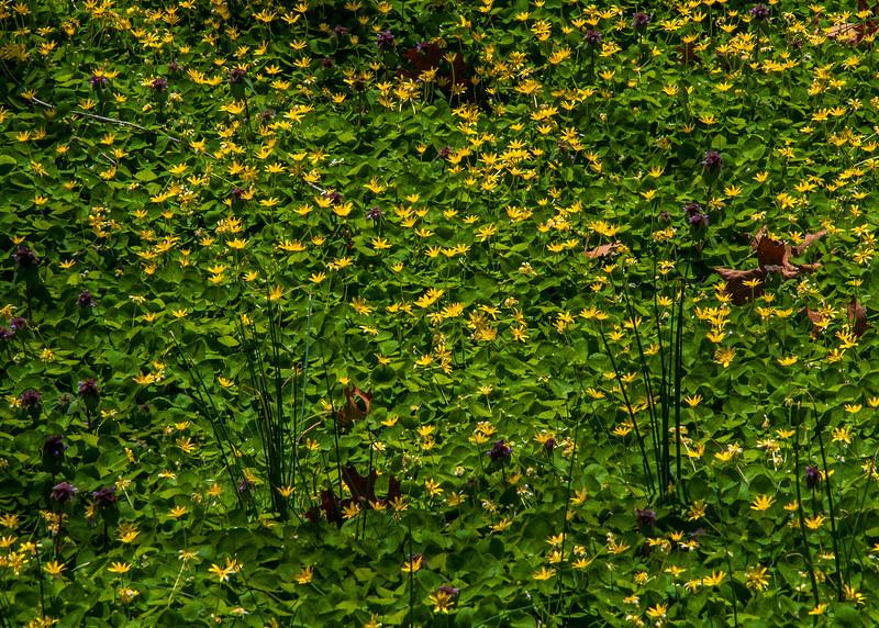 Wildlands Conservancy - Emmaus, PA - 2015