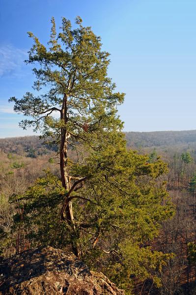 Ralph Stover State Park - Bucks County, PA - 2012