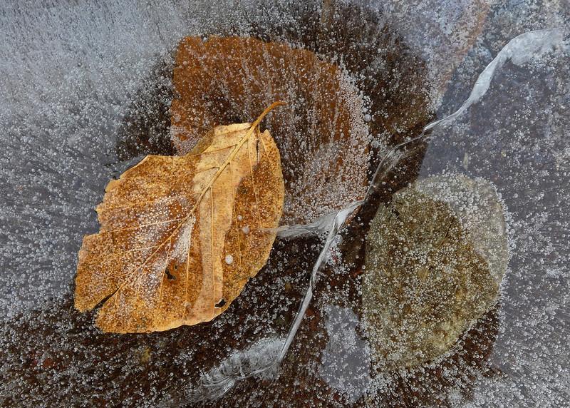Leaves in Ice - Cedar Creek Park - Allentown, PA - 2013